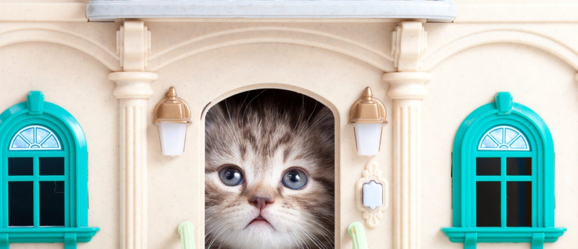 Tips for helping a new kitten feel at home
