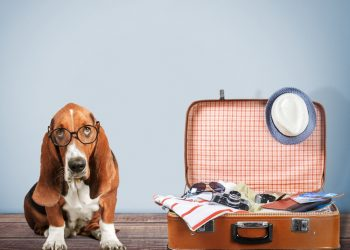 Tips and advice for travelling with a dog