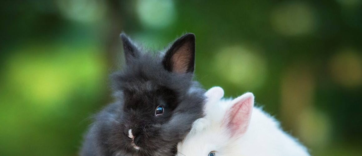 Choosing a rabbit as a pet: what do I need?