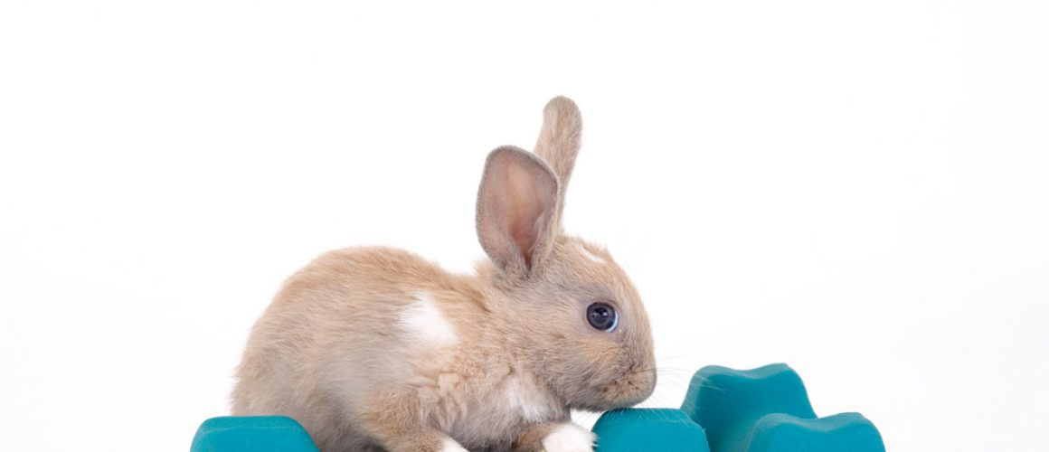 The importance of exercise for rabbits